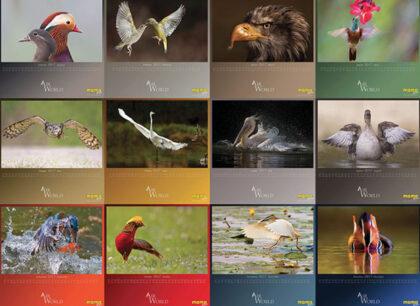momo-birds_ok